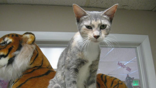 Bernadette is ready for a home of her own.