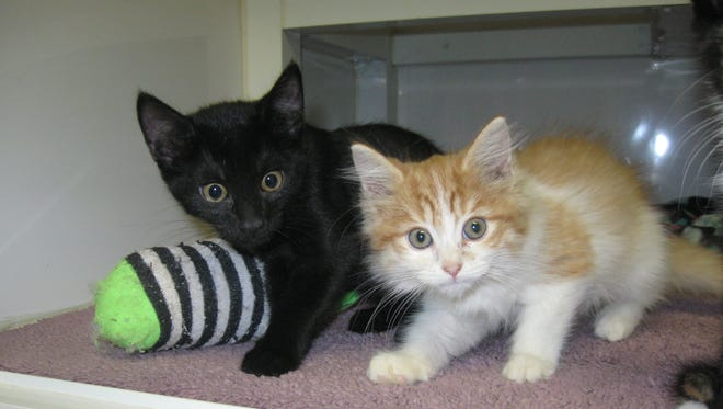 Look at us! A couple of the sweetest kittens you ever seen!