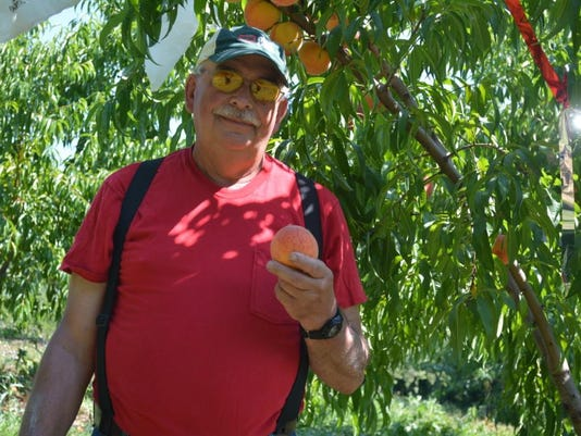 Clark's Orchard