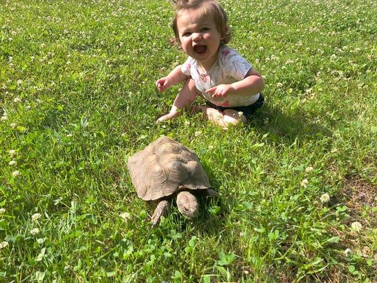 Tommy the tortoise meets a new friend in the Garden
