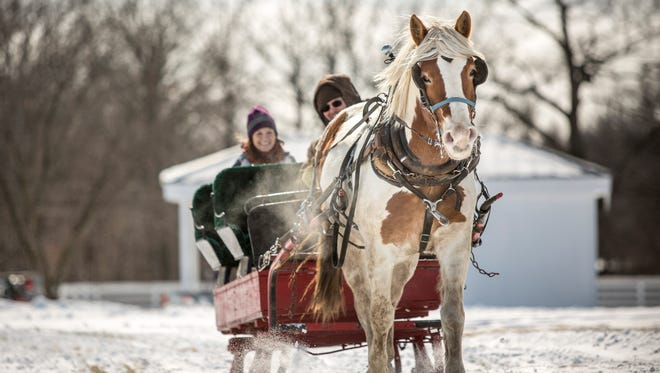 Misty the horse pulls a sleigh. Today is Sleigh Day from 10 a.m to 2 p.m. at Goodells County Park
