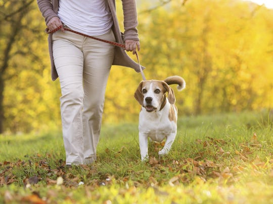 Families are invited to bring their dogs to the event on June 8 at Tower Park for Tails and Trails in Brentwood.