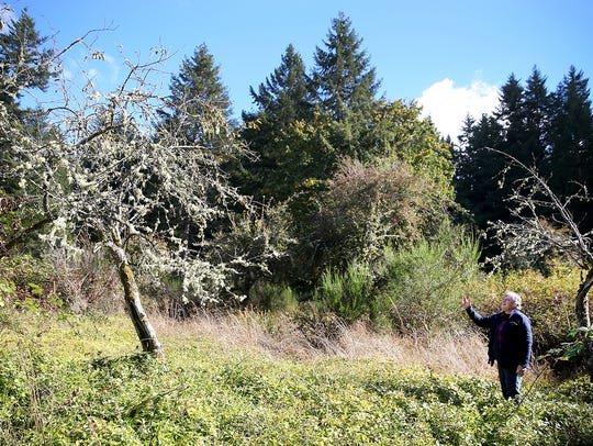 Terri Jones, a Navy forester at Naval Base Kitsap-Bangor, stands in an orchard planted by homesteaders.