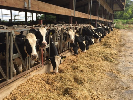 MANBrd-10-11-2015-Herald-1-C003-2015-10-09-IMG-cows-eating-1-1-VEBMAV7O-L676540789-IMG-cows-eating-1-1-VEBMAV7O.jpg