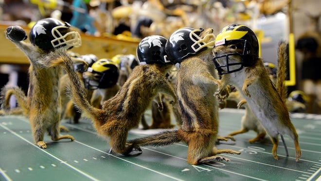 "The quarterback is poised to pass the winning touchdown as 21 other stuffed chipmunks  ""play"" an MSU vs. UM football game. Wednesday, July 29, 2015, in Nick Saade taxidermy shop in Lansing. Saade said these are nuisance chipmunks who were trapped in cabins up north. He doesn't like to see anything go to waste, so he decided to make the football display out of them."