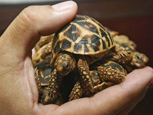 Thailand confiscated turtles
