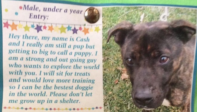 Cash is available for adoption at Animal Welfare League.