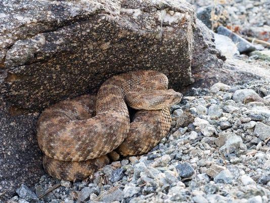 635668905451415423-rattlesnake