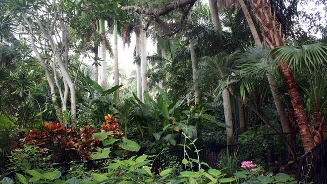 Not far from downtown St. Petersburg, and just a short ride from the beaches, is Sunken Gardens, a lush, tropical oasis and botanical landmark, in business since the 1920s. Easy walking pathways cross over ponds while guests admire the tropical birds and flamingos. You can enjoy this shady, beautifully maintained garden sanctuary for the bargain price of $8.