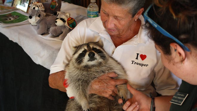 Visitors to the Naples Preserve can shake hands with Trouper the blind raccoon during the free Preserving the Holiday Spirit open house. Trouper will appear all three evenings.