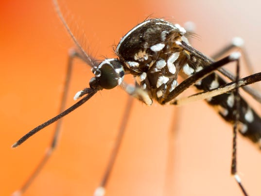 Asian Tiger Mosquito extreme close up