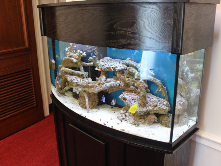 U.S. Rep. Brian Mast uses a salt water aquarium in
