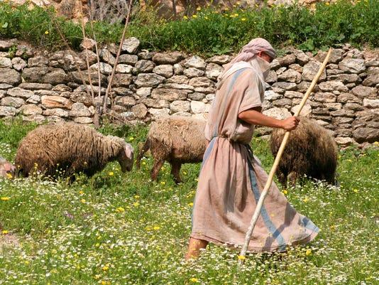Shepherd walking with herd of sheep along stone wall