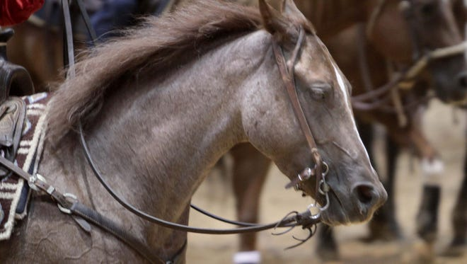 File photo: A horse is shown at a cutting horse event in West Monroe, La.