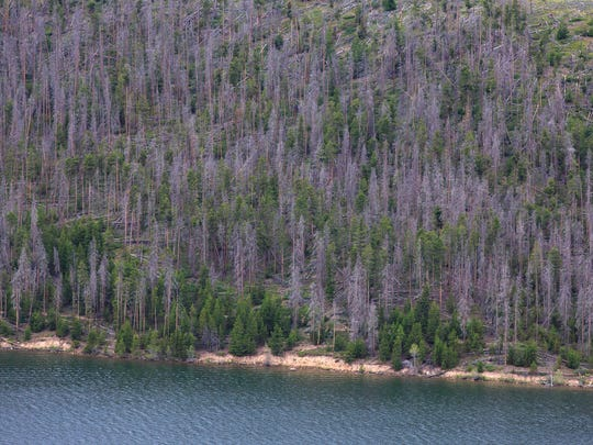 In this Friday, July 14, 2017, photo, large gaps are shown on a hillside by the snags of trees left in the wake of an the infestation of the Mountain Pine Beetle near Frisco, Colo. (Hugh Carey /Summit Daily News via AP)