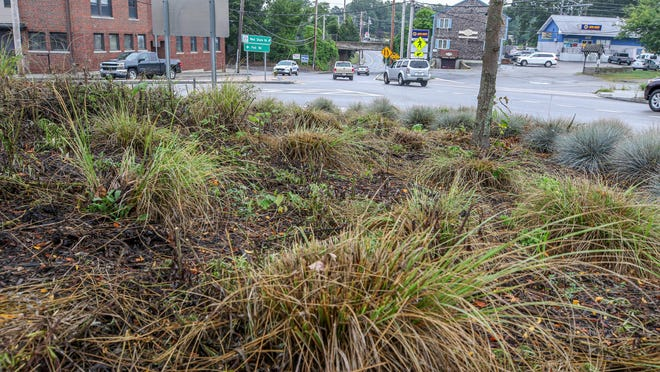 A public works crew has hacked down weeds - and ornamental grass - in two sections of the Apponaug Circulator, a week after Hummel found the city had neglected expensive landscaping along the $71-million project.