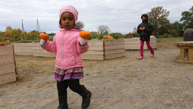 Shiloh Ashlyn Hill, 2, walks with the two pumpkins she just picked from the pumpkin patch during the Palmer Park Harvest Fest in Detroit hosted by People for Palmer Park on  Oct. 5. Michigan ranked fifth in the nation last year for pumpkin production, with cooler temperatures helping the crop.