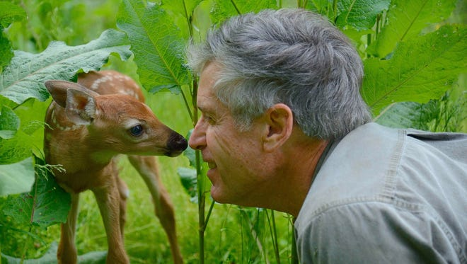 Charlie Alsheimer nuzzles a white-tailed fawn he encountered during a photo shoot in May 2017.
