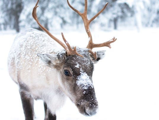 R Reindeer Real OUTDOORS: Time running...