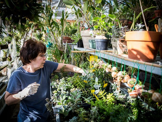 Volunteer Deb Frederick cares for plants at Ball State's