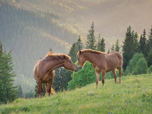 Horses couple on the mountaon field during sunset. Beautiful natural landscape with animals