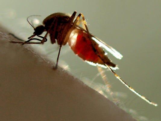 -7-11p1aMosquito.jpg_20081009.jpg