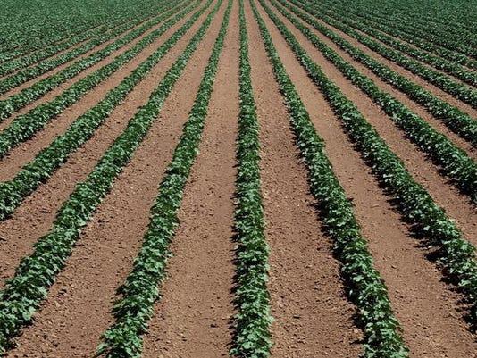 soybeansX2.jpg