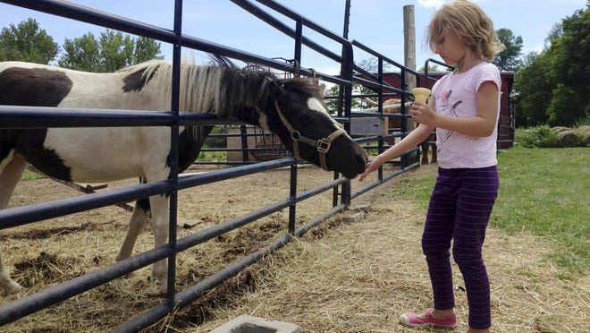 Beatrice LeVesque of Montreal feeds a horse at Allenholm Farm apple orchard in South Hero.