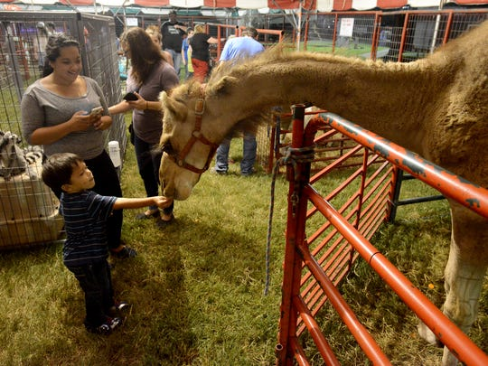 LaMarcus Newby hands a camel a piece of carrot at the West Tennessee State Fair petting zoo. The fair continues through Sunday, Sept. 18.