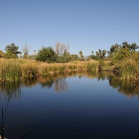 Tucson hike: Birds flock to the water at Sweetwater Wetlands