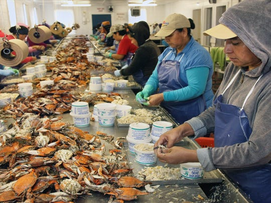 The Maryland crab industry relies heavily on so-called