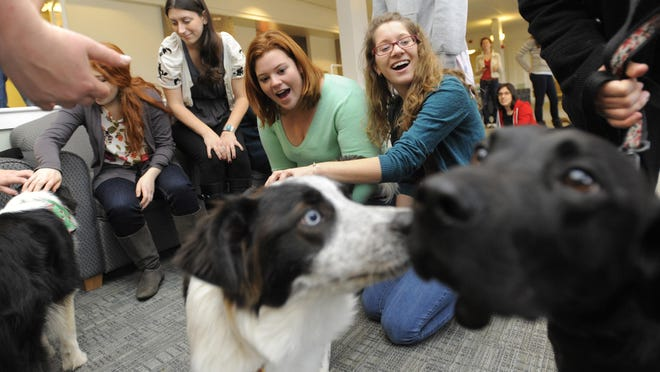 Tufts University students take a break from their studies to pet therapy dogs on the university's campus in Medford, Mass., in 2010.