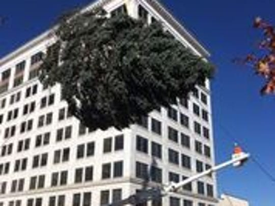 City workers set the Christmas tree in place in the downtown square on Tuesday.