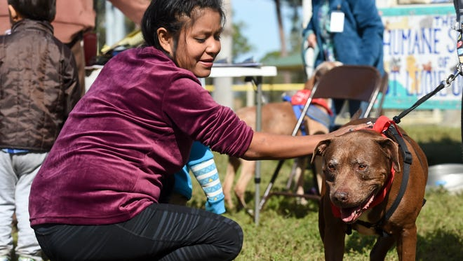 Dogs of all shapes and sizes found new homes during an event held by the Humane Society of St. Lucie County at Lyngate Dog Park in Port St. Lucie in this January, 2018 file photo.