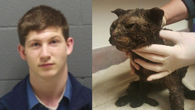 Suspect Noah Riley and the injured cat.