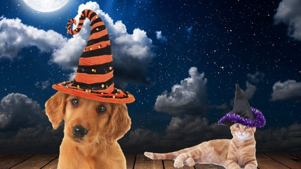 Which pet has the best Halloween costume?