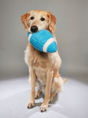 Rommy, a service dog and rescue.