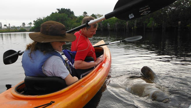Two presentations on manatees and  a guided kayak tour are scheduled this week.