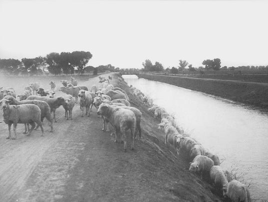 When Indian School Road Was Filled With Sheep
