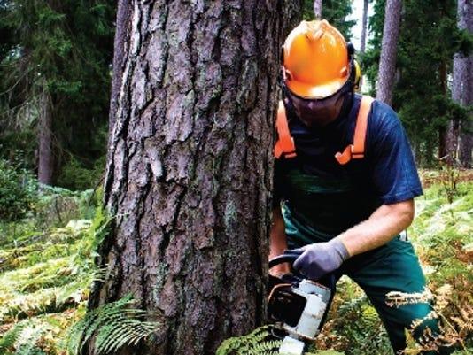 tree thinning