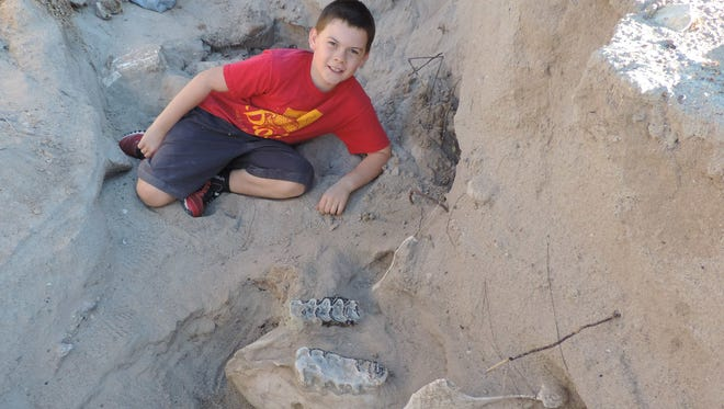 Jude Sparks' accidental discovery in the Las Cruces desert led a New Mexico State University professor to a rare, mostly intact 1.2 million year-old stegomastodon skull.
