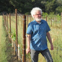 Cafe Society: Ojai Vineyard looks to grow its own, thanks to Pierce's Disease-resistant grapes
