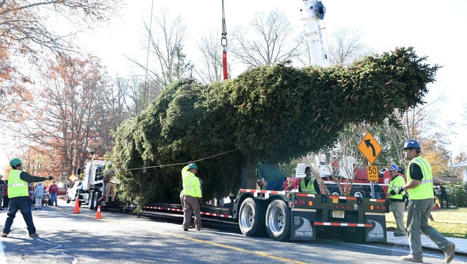 A crew takes down a Norway Spruce tree in Gardner which will be used as the Rockefeller Center Christmas Tree.