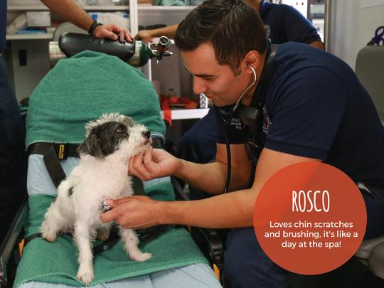 El Paso Firefighter Juan Alvarado checks out Rosco for the 2018 calendar.