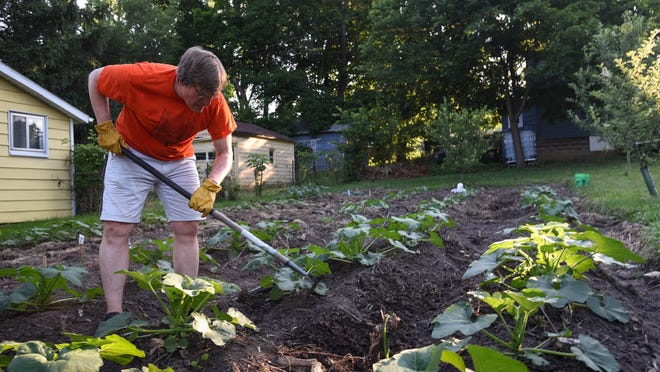 """Ingham County Treasurer Eric Schertzing works at the """"Community Rasberry Patch,"""" Thursday, July 2, 2020.  The property is part of the Land Bank, and though Schertzing lives in East Lansing, he maintains a garden plot at this urban garden near Hayford Avenue and Marcus Street on Lansing's eastside as a way to grow food and be a part of the growing community of urban farmers."""