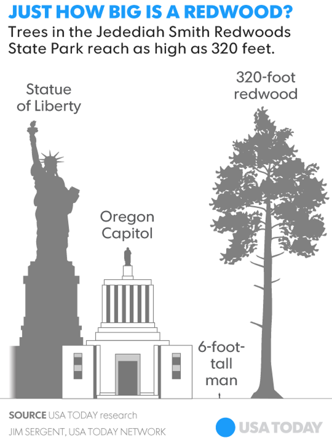 Just how big is a redwood?