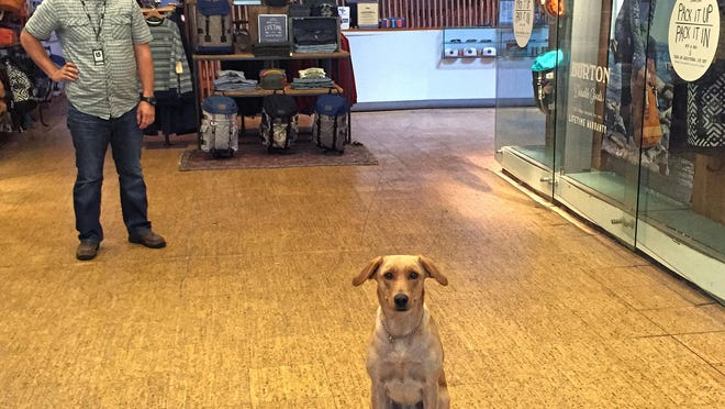 Ruby, the greeter at Burton Snowboards' Burlington headquarters, poses with her owner Drew Lucier. Burton has been a dog-friendly company since 1977.