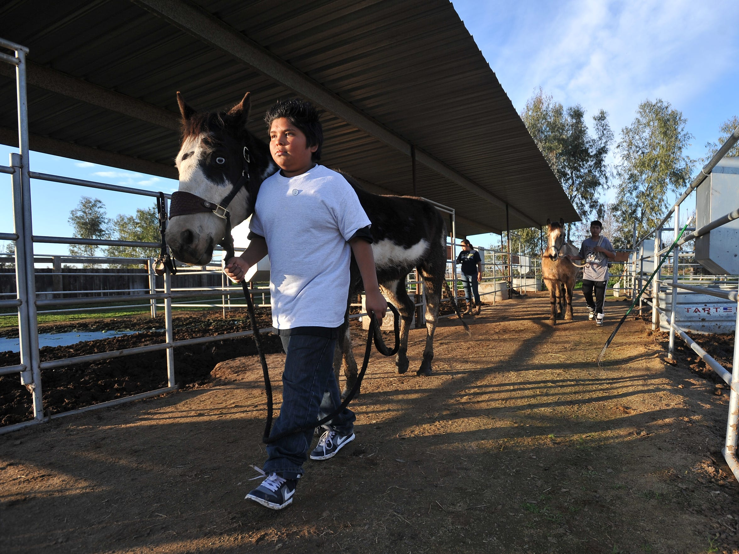 A.L.P.H.A. student Jesus Fernandez of El Monte Middle School walks a horse at JM Ranch on Friday, January 15, 2016.
