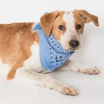 Gallery: Cats and dogs up for adoption