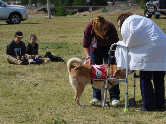 A demonstration of work done by therapy dogs was part